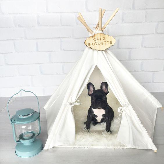 犬と行くキャンプ!便利グッズ10選