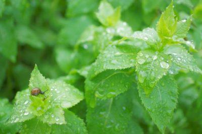 雨に濡れる葉とカタツムリ
